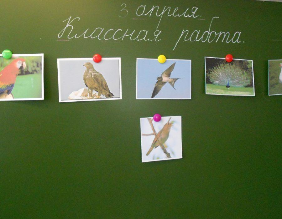 Угадывали птиц по портрету